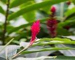 Mon Choisy Beach Resort, Mavricius - last minute počitnice