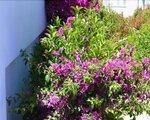 Mare Dei Suite Hotel Ionian Resort, Araxos (Pelepones) - namestitev
