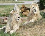 Zoo Safaripark & Erlebnisresort Stukenbrock, Paderborn (DE) - namestitev
