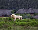 Pumba Private Game Reserve, Port Elizabeth (J.A.R.) - namestitev